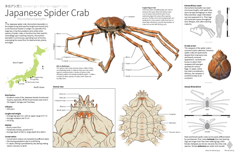 Michael Soong Spider Crab 1