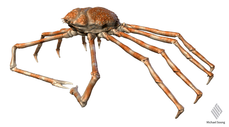 Michael Soong Spider Crab 4