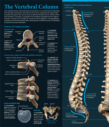 Michael Soong Vertebral Column